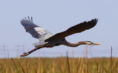 What Wildlife Can You See During an Airboat Ride?