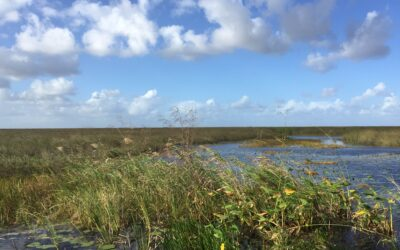 Endangered Plants of the Everglades