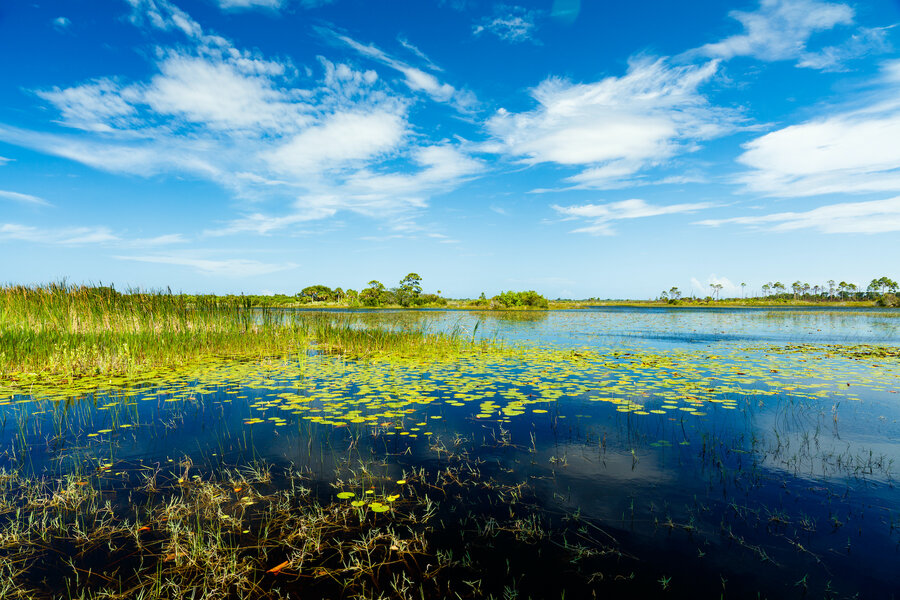 What to Bring With You on an Everglades Tour in Fort Lauderdale
