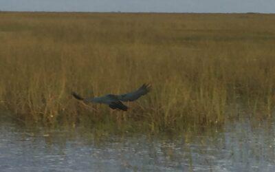 Non-Native Plants Threatening the Everglades