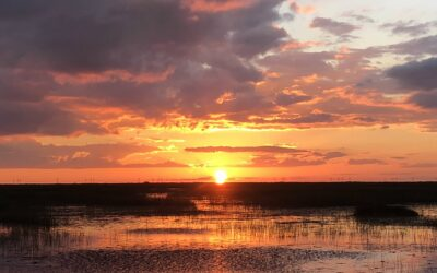 Top 3 Reasons to Take a Sunset Tour of the Evergladesa